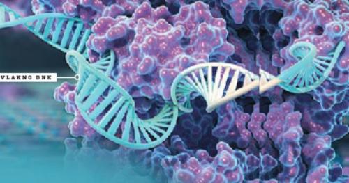 Iz slovenske izdaje revije Science Illustrated: Čip za odkrivanje dednih bolezni